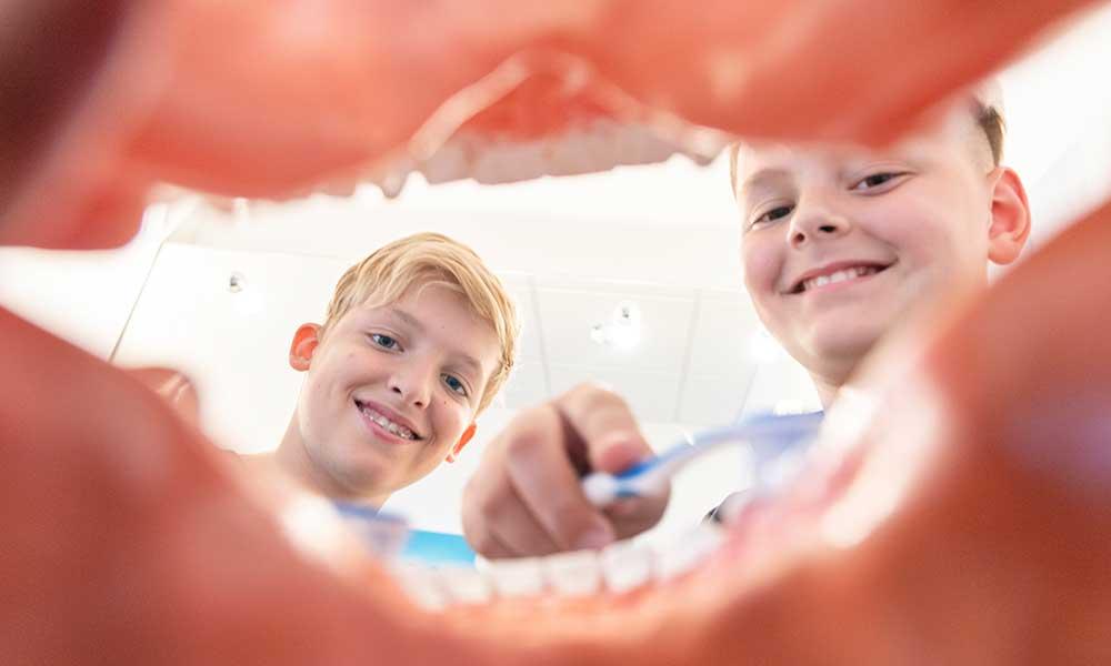 Durch ein Gebiss sind zwei Kinder zu sehen, die mit einer Zahnbürste das Gebiss putzen